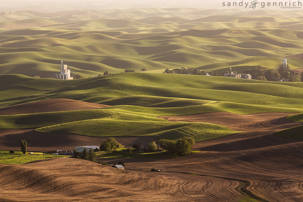 Whitman County Growers - Steptoe Butte - The Palouse WA